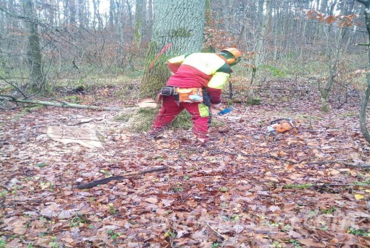 Forest-Maintenance-from