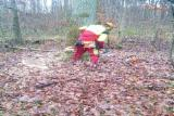 Servicii Forestiere Europa - oferta prestari servicii forestiere