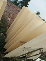 Rotary Cut Veneer Eucalyptus - Eucalyptus Rotary CutVeneer