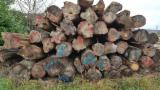Find best timber supplies on Fordaq - SEGHERIA GRANDA LEGNAMI SRL - Cherry Saw Logs 40+ cm