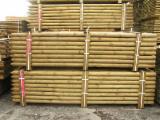 Nadelrundholz Zu Verkaufen - Kiefer - Föhre 6; 7; 8; 10; 12 cm treatment c3/c4 Pfähle, Pfosten Polen zu Verkaufen