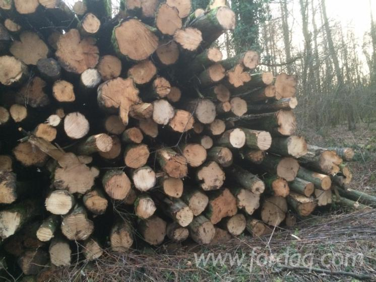 Beech-Industrial-Logs-10-