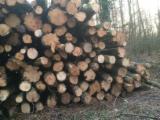 PEFC/FFC Certified Hardwood Logs - Beech Industrial Logs 10+ cm