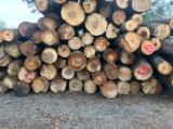 Red Oak Logs 12