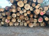 null - Schnittholzstämme, Roteiche