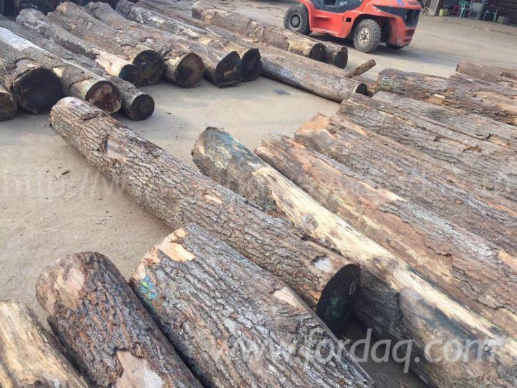 Red-Oak-Logs-2SC-