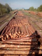 Madera Blanda  Troncos En Venta - Venta Troncos Industriales  Pino Silvestre  - Madera Roja FSC Estonia