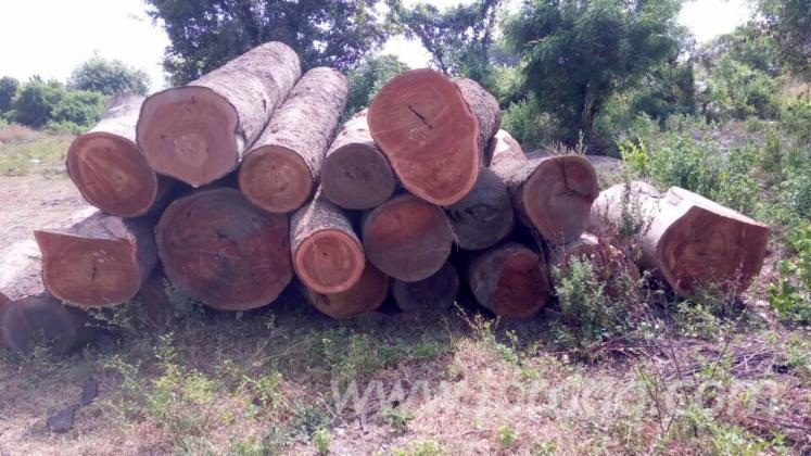 Tali-Saw-Logs-20-