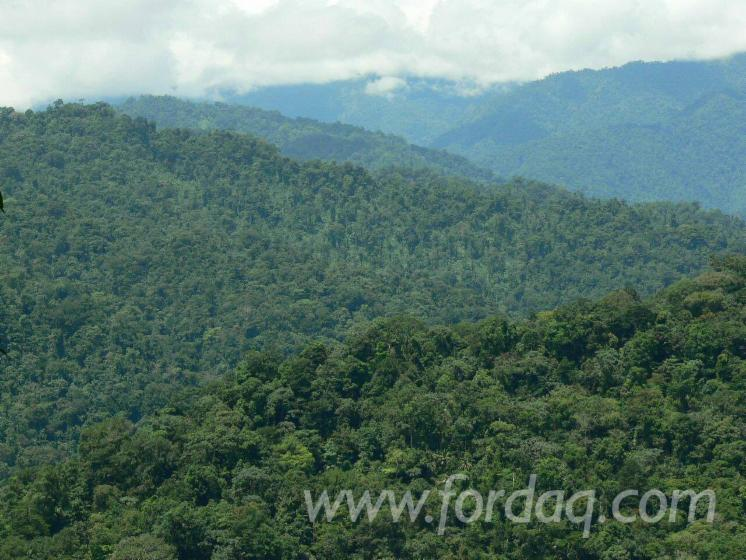 Teak-Woodland-from-Panama-4000--5000--10000--15000
