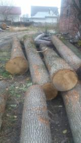 null - Buying Oak Saw Logs- Romania