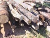Firewood/Woodlogs Not Cleaved - Firewood/Woodlogs Not Cleaved