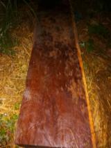泰国 - Fordaq 在线 市場 - 方形原木, 紫檀木, 黑黄檀木