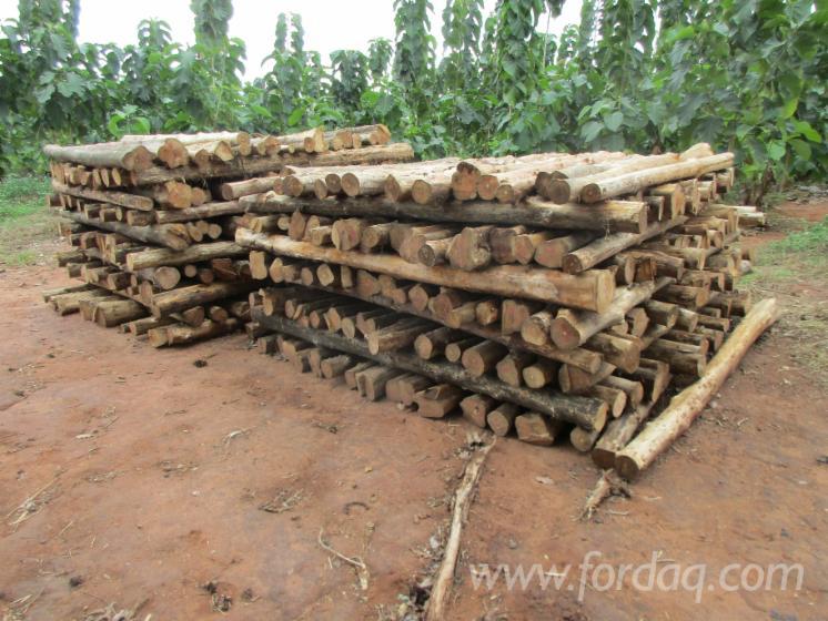 FSC-Teak-Logs-120