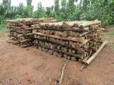 Hardwood Logs Suppliers and Buyers - FSC Teak Logs 120 mm