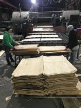 木皮供应网络 - 批发硬木木皮和热带木木皮 - 榉木, 旋切