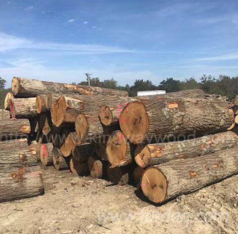 Red-Oak-Logs-1SC
