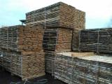 Trova le migliori forniture di legname su Fordaq - DIVERUS, UAB - Compro Segati Refilati Betulla 24 mm