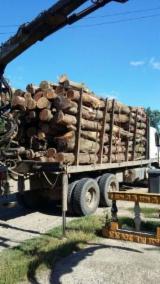 Servicii De Transport Lemn - Înregistrează-te Pe Fordaq - Transport lemn foc - 225 lei