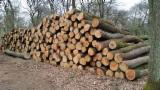 FSC Certified Hardwood Logs - White Oak Logs 25+ cm