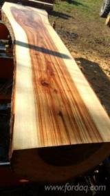 森林及原木 大洋洲 - 锯木, 樟木