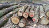 Find best timber supplies on Fordaq - Bois Commercial Wood - 25+ cm Oak Saw Logs from Germany
