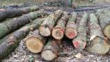 Canada - Furniture Online market - 25+ cm Oak Saw Logs from Germany