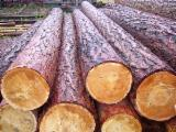 Softwood Logs for sale. Wholesale Softwood Logs exporters - Siberian Spruce Logs 18-70 cm