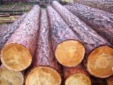 Evidencije Trupaca Za Prodaju - Drvenih Trupaca Na Fordaq - Za Rezanje, Sibirska Smreka
