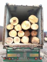 Laubrundholz  Zu Verkaufen - Schnittholzstämme, Buche