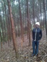 Timberland For Sale - Eucalyptus Grandis Woodland