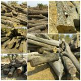Forest And Logs Africa - Doussie Logs 30+ cm