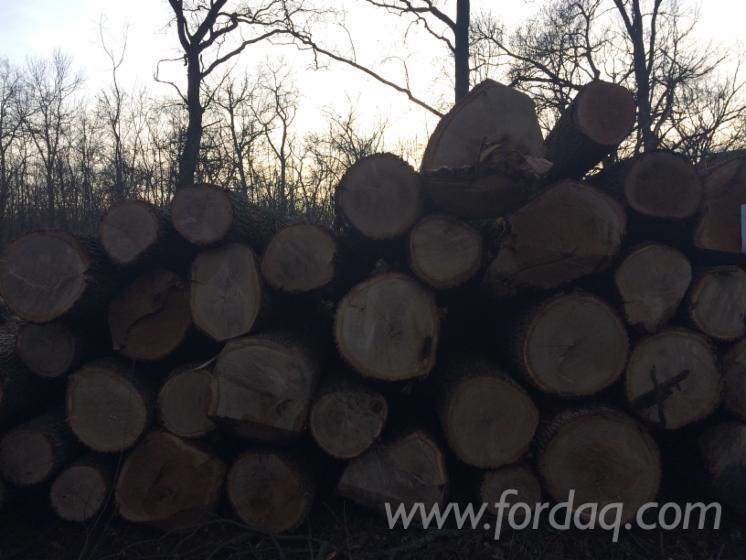 FSC-24-40-%28la-capatul-subtire%29-cm-Oak-Saw-Logs-from-Romania