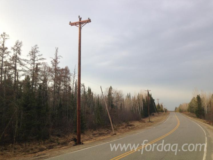Pine-Poles-155-180