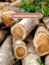 硬木:原木 轉讓 - 锯材级原木, 柚木