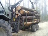 Trabajos en Europa - Producción Cosecha Forestal