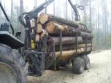 Wood and Forestry Commercial Intermediation Services  - Muncitor Forestier