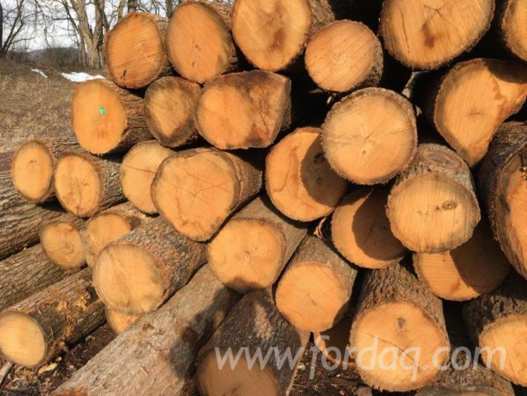 Red---White-Oak-Logs