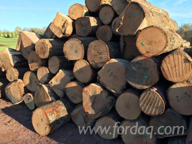 Red-Oak-Logs