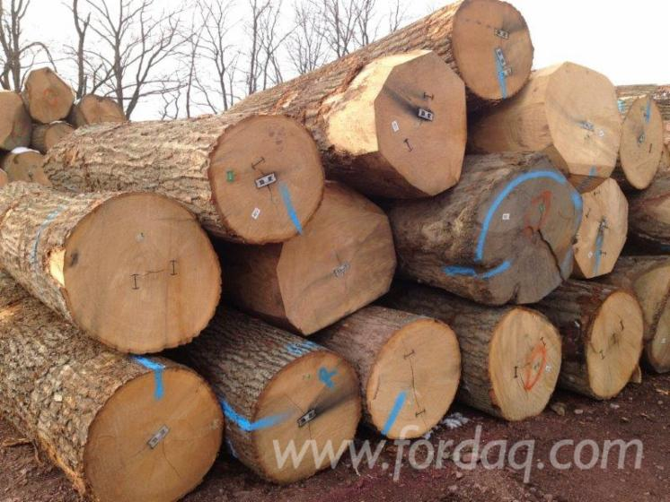 "Red Oak Veneer Logs 13""+"