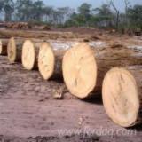 Iroko Hardwood Logs - Iroko Logs 80+ com