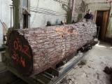 Troncos De Madera Dura Demandas - Compra de Troncos Para Chapa Nogal Negro Turquía