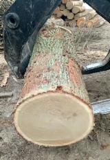Forest And Logs Asia - +45 cm Oak Veneer Logs