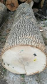 Hardwood  Logs Demands - White Ash Veneer Logs 45+ cm
