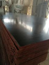 Chine - Fordaq marché - Vend Contreplaqué Filmé (Noir) Eucalyptus 12,15 mm Chine