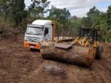 Forêts Et Grumes Océanie  - Vend Grumes De Trituration Saman CE