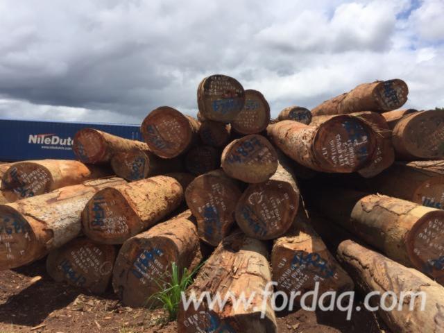Azobe-Saw-Logs-for-Sale
