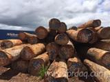 Schnittholzstämme, Azobé