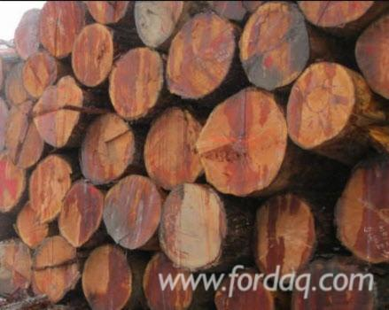 Buying-Douglas-Fir-Saw-Logs