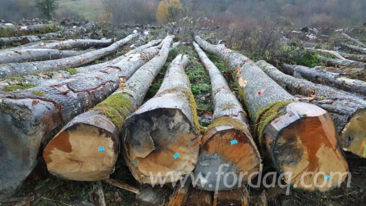 Red-Oak-Saw-Logs-from-France