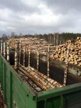 Veneer Logs - Birch Veneer Logs from Russia, diameter 18 cm
